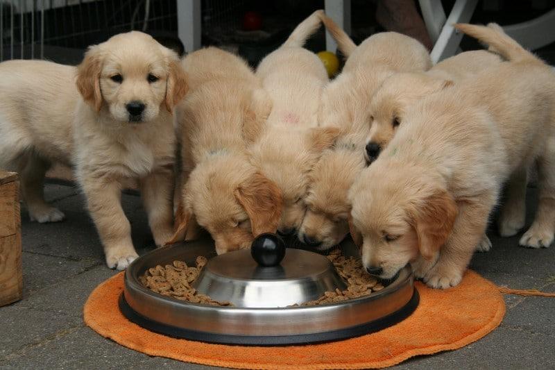 dogs on keto diet
