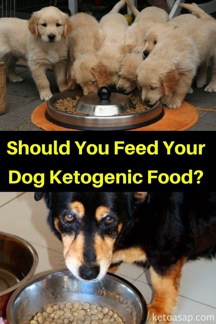 Ketona: Low Carb Ketogenic Dog Food Review
